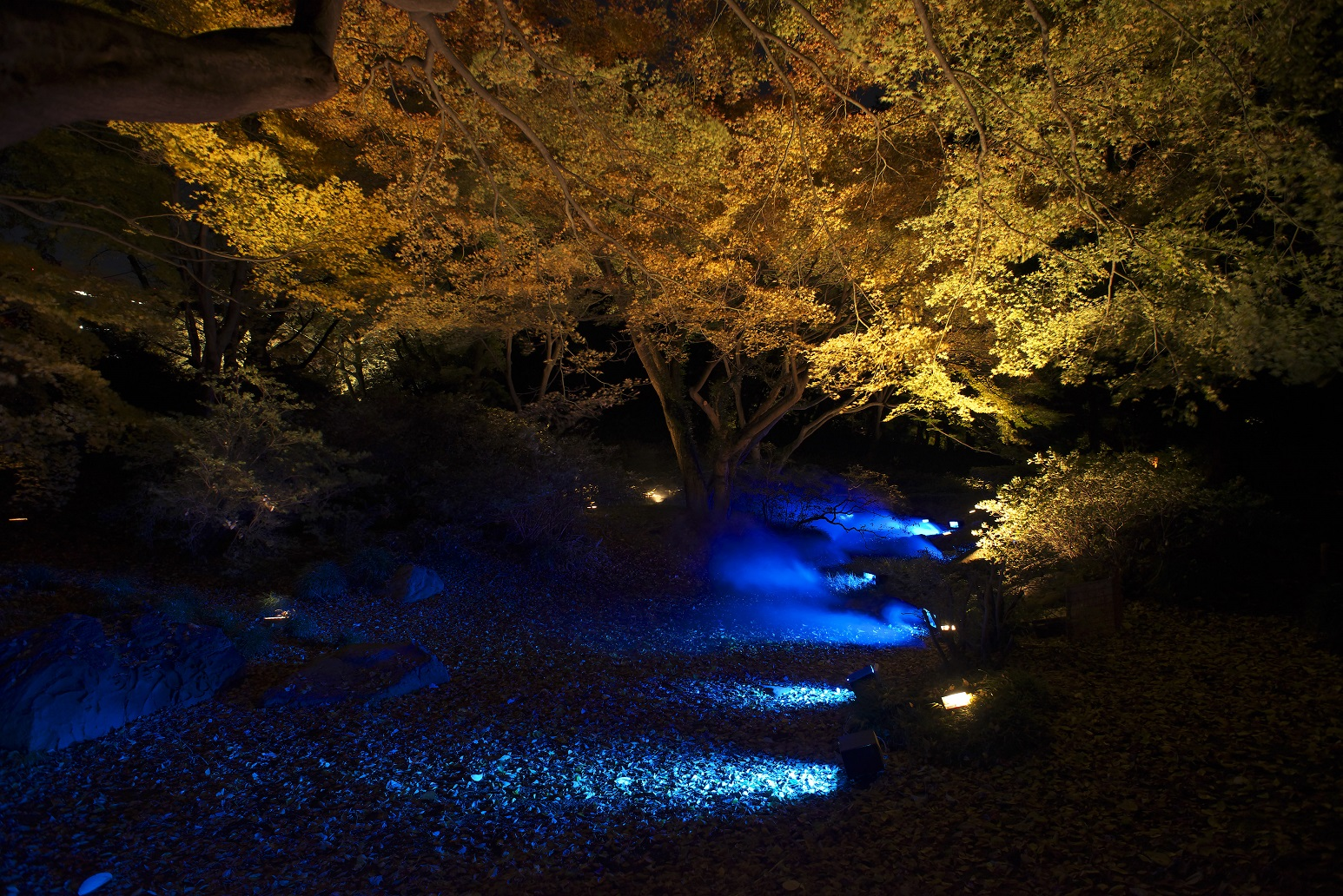 六義園 紅葉ライトアップ Rikugien autumn lighting (article by amuzen)