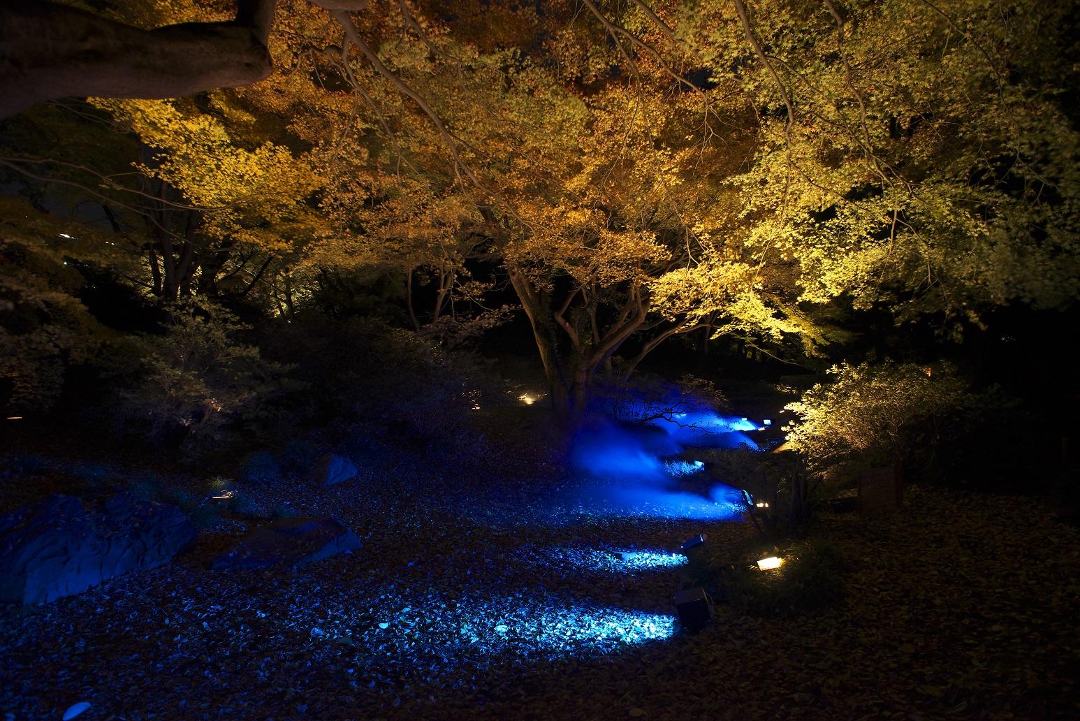 六義園 紅葉ライトアップ Rikugien autumn lighting (article by amuzen)