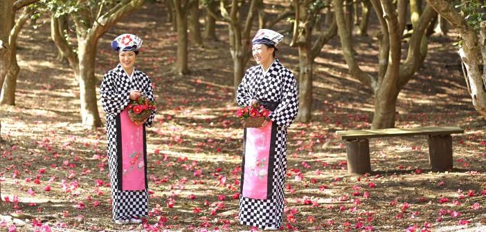 Izu Oshima Camellia Festival 2016 (article by amuzen)