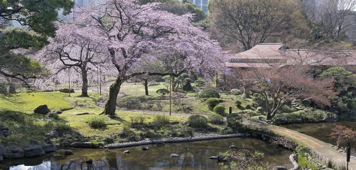 Koishikawa Korakuen: Cherry blossom & hanami 2016 (article by amuzen) jp