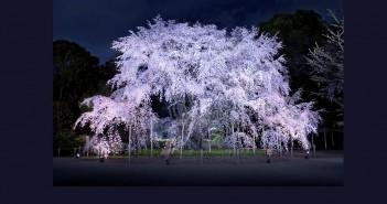 Rikugien - Cherry blossom & hanami 2016 (article by amuzen)