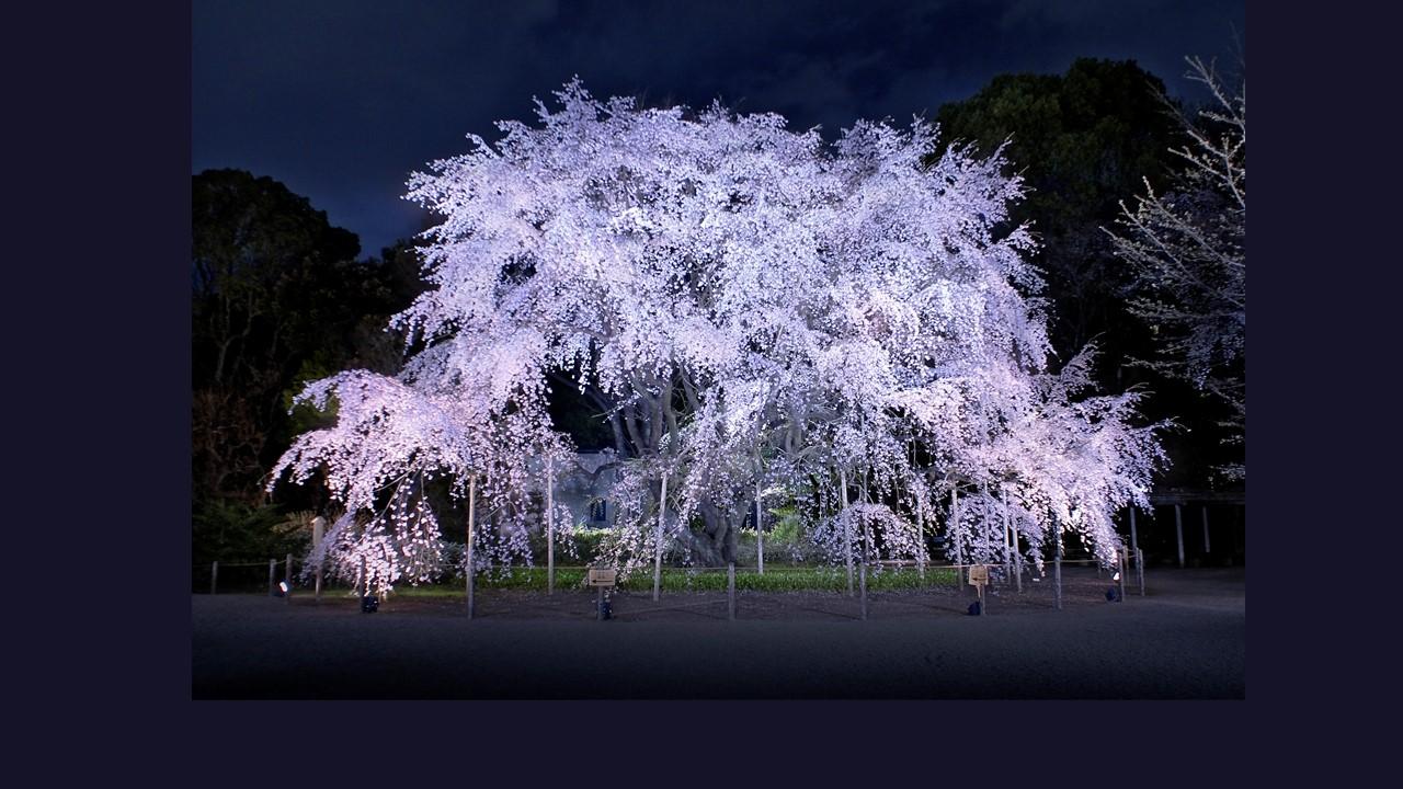 © 公益財団法人 東京都公園協会