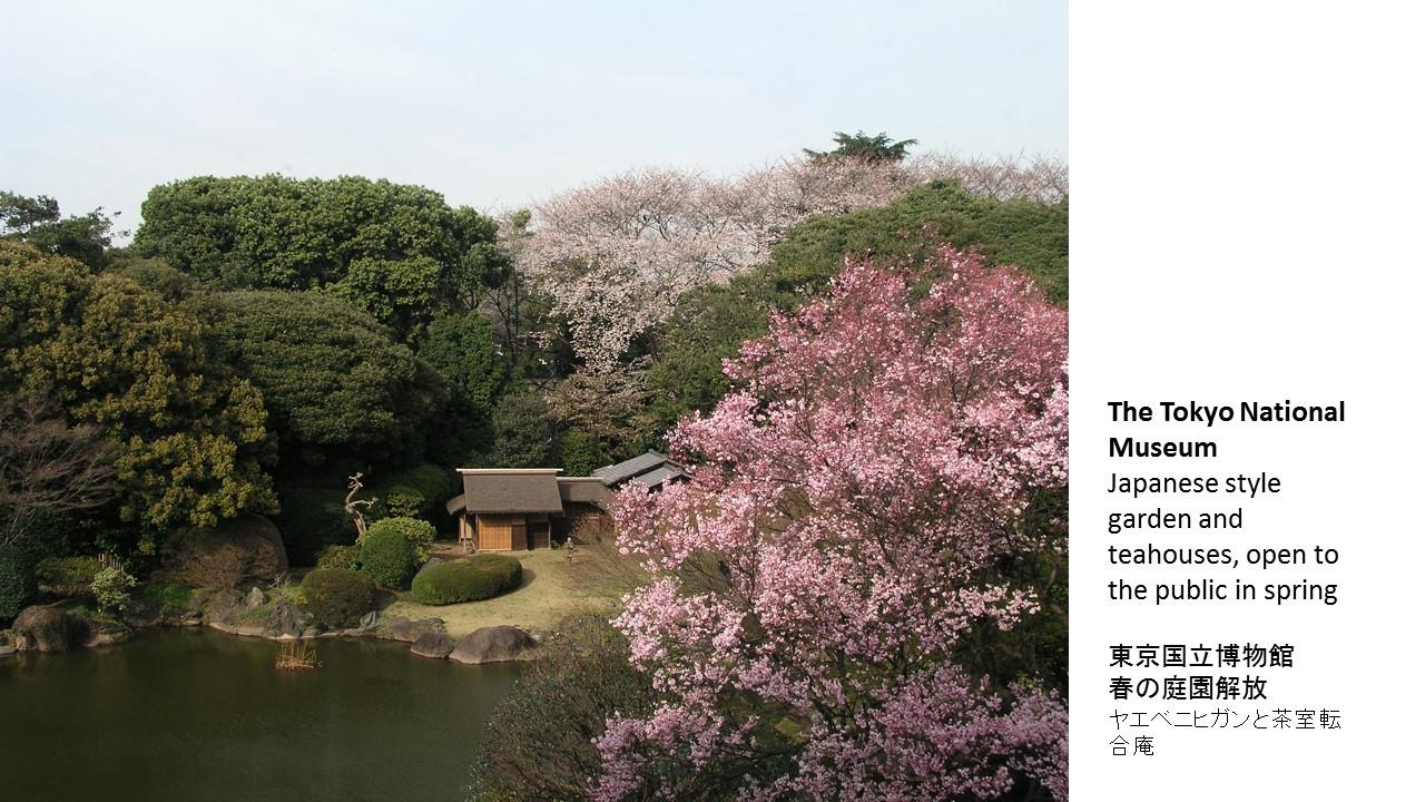 東京国立博物館「博物館でお花見を」(article by amuzen) 庭園