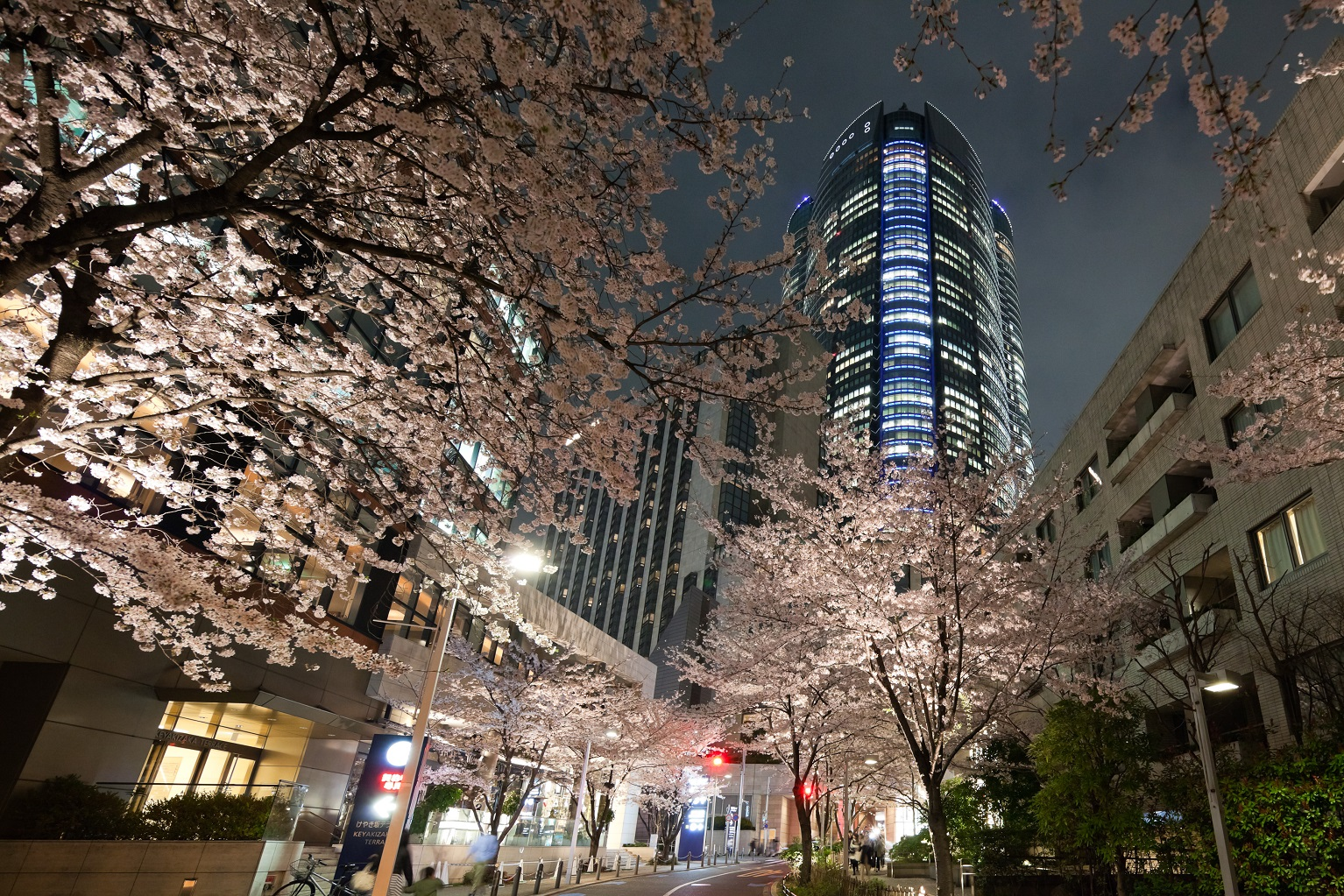 Roppongi Hills SPRING 2016 (article by amuzen)