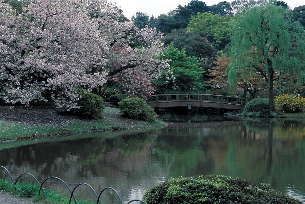 新宿御苑 -四季折々に楽しめる都会のオアシス (amuzen article)