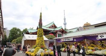亀戸天神社 菊まつり2016 東京スカイツリーと競演(amuzen article)