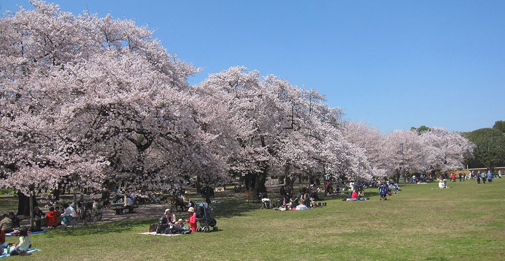 小金井公園の花見 2020