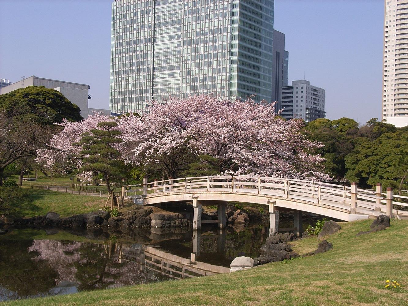 「浜離宮公園  2017年4月の桜」の画像検索結果