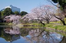 小石川後楽園で楽しむ花見 2020
