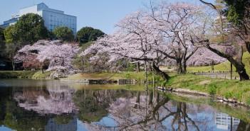小石川後楽園 桜と「春の開園時間延長」(amuzen article)