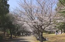 葛西臨海公園の花見2020