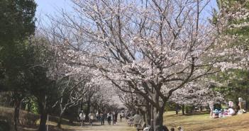 海辺の公園にてお花見 2017 葛西臨海公園(amuzen article)