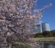 浜離宮恩賜庭園の花見 2020