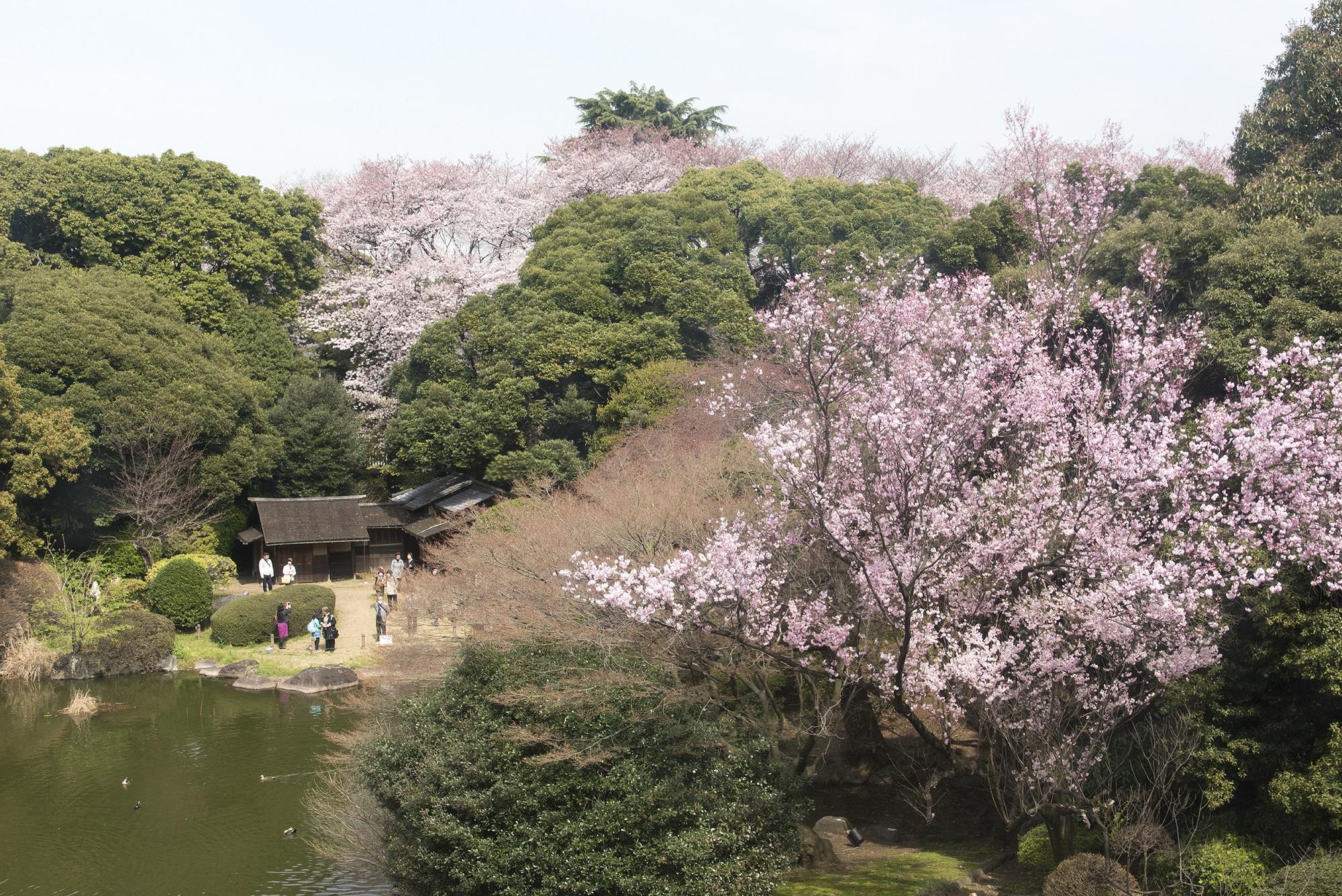 東京国立博物館 春の庭園解放