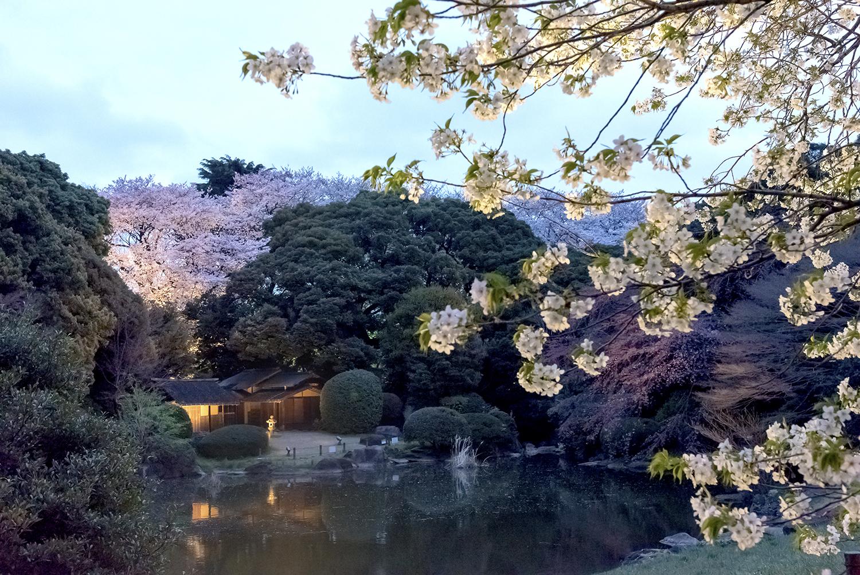 東京国立博物館 庭園ライトアップ