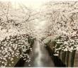 目黒川の花見2017 桜 ライトアップ(amuzen article)