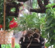 「千日詣り・ほおずき縁日」愛宕神社(amuzen article)