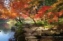 小石川後楽園「深山紅葉を楽しむ」(amuzen article)