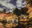 大田黒公園 紅葉ライトアップ2019