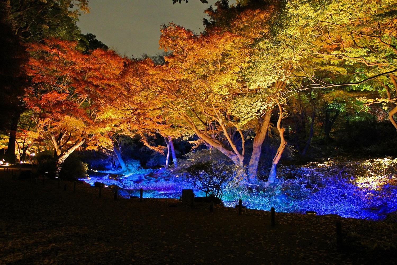 六義園「紅葉と大名庭園のライトアップ」2017 (amuzen article)