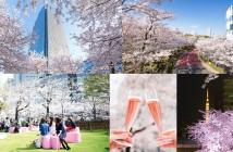amuzen 東京ミッドタウンのお花見「MIDTOWN BLOSSOM 2018」