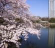amuzen 浜離宮恩賜庭園の花見と開園時間延長2018