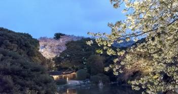 amuzen「博物館でお花見を 2018」(東京国立博物館)