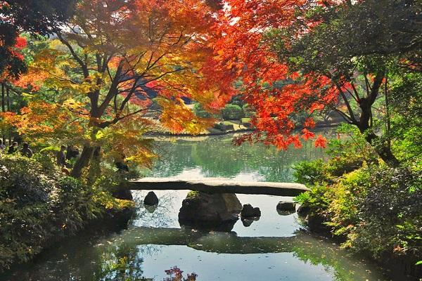 六義園「紅葉と大名庭園のライトアップ」2018