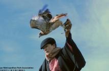 新春の空に鷹が舞う! 浜離宮庭園のお正月