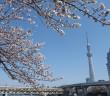 隅田公園の花見 2019