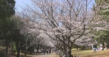 葛西臨海公園の花見2019