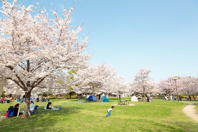舎人公園の花見2019