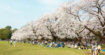 小金井公園の花見 2019