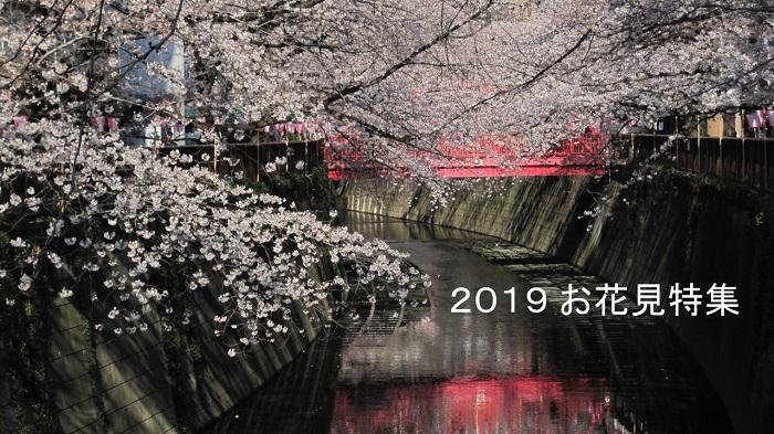 amuzen 「お花見2019 in 東京 おすすめスポットとイベント」