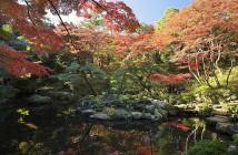 殿ヶ谷戸庭園で紅葉を楽しむ