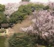 博物館でお花見を 東京国立博物館