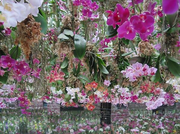チームラボプラネッツ 2つの庭園 体験レポート