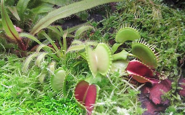 カハク「植物」展 潜入ルポ! | あみゅーぜん